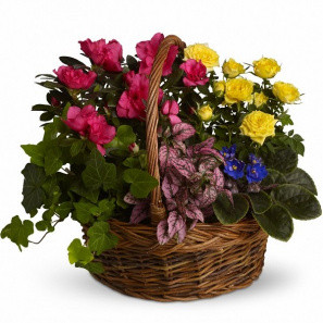 Blooming Garden Basket buy at Florist
