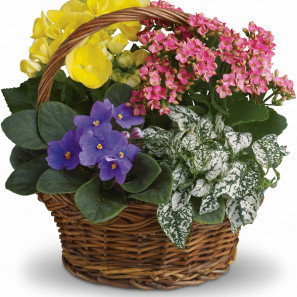 Blooming Planter Basket buy at Florist