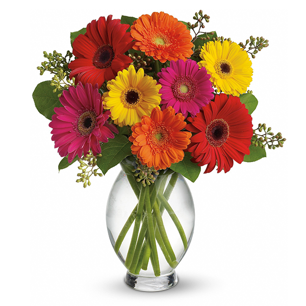 Gerber Brights buy at Florist