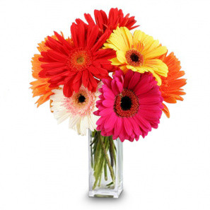 Gorgeous Gerberas buy at Florist