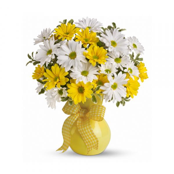 Sunshine Daisies buy at Florist