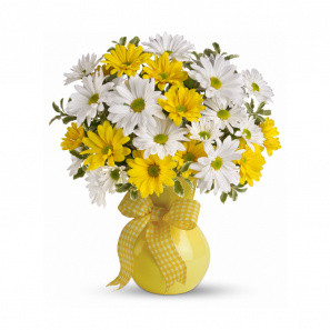 Sunshine Daisies buy at Florist