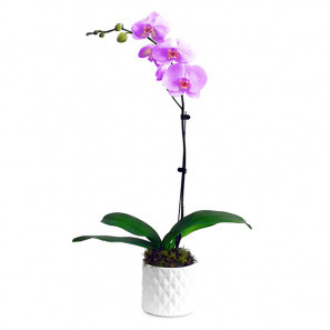 The Only Orchid Pink buy at Florist